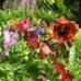 Same Soil, Various Flowers