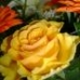A yellow rose 1.
