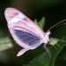 Fluorescent Butterfly