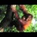 DeforestAction: Project Borneo 3D - Zein Alitamara