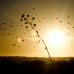 Birds, Tree at sunset