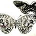 Butterfly-3,4