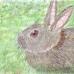 Puffy Rabbit - Melody St.Pierre