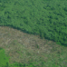Deforested_area1_Photo